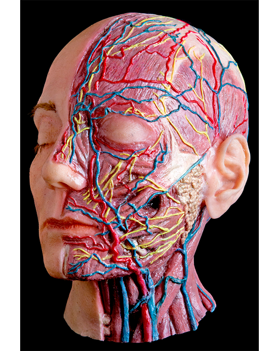 THE WORLD'S MOST REALISTIC FACIAL INJECTION MANIKINS
